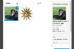 实现wordpress多个特色图片插件:Multiple Post Thumbnails